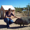 Pot belly pig sanctuary