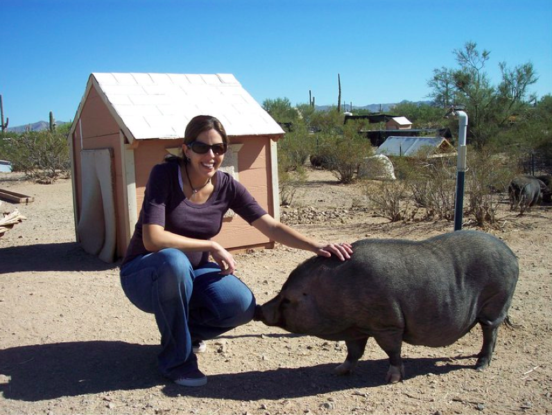 Pot belly pig sanctuary- Hungry Herbivores